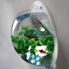 Fish Bowl Decorations Wall Mounted Fish Bowl Aquarium This Would Be So Awesome