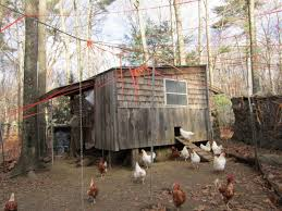 Can You Have Chickens In Your Backyard Backyard Chicken Basics Old Farmer U0027s Almanac
