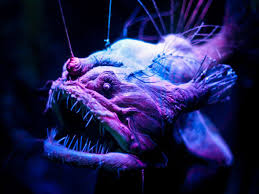 purple and black halloween background in photos spooky deep sea creatures