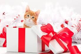 Original Christmas Gift Ideas - affordable christmas gift ideas