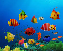 decorations for aquarium picture more detailed picture about