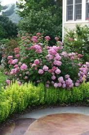 native louisiana plants 24 best native shrubs images on pinterest shrubs garden plants