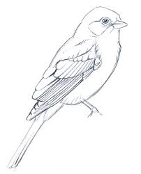 25 bird drawings ideas bird tree tree bird