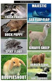 Stupid Animal Memes - 20 animal pics gallery ebaum s world