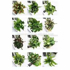 artificial green wall artificial green wall suppliers and