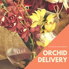 what you should know before ordering your orchid delivery