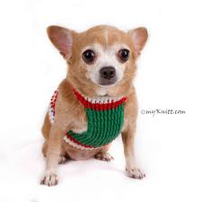 chihuahua sweaters all products chihuahua sweater myknitt