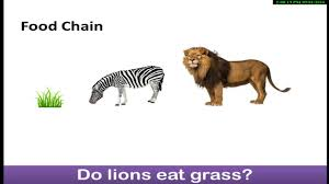 Food Chains Worksheet Science Animal Plant Food Chains Urdu Hindi Class 1 Class 2