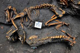 one of a kind aztec dog burials found in mexico