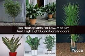 best indoor plants for low light top houseplants for low medium and high light conditions indoors