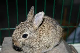 cuisiner un lapin de garenne petit lapin de garenne qui vient de me quiter supertoinette