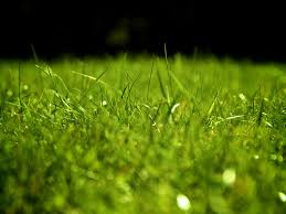 free grass for sports template backgrounds for powerpoint sports