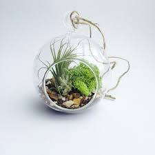 hanging terrarium globe these amazing terrarium lamps grow plants