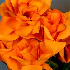 roses wholesale 336 velvet bloom open roses wholesale wedding flowers bouquets
