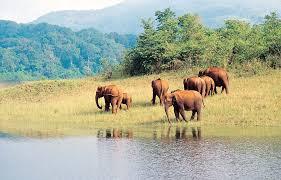 wildlife tours images Wildlife tour packages in india india wildlife ranthambhore jpg