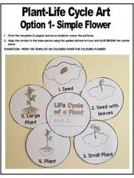 plant life cycle art activity template spring pinterest