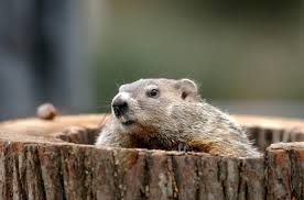 groundhog day pictures images photos