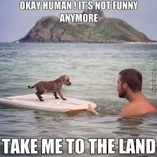 Tired Dog Meme - getting tired of your shit human by ahad sikhaki meme center