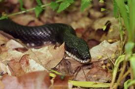 How To Find Snakes In Your Backyard Deep Snakes In Connecticut