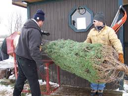 fly a way farm choose and cut christmas trees delaware oh