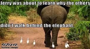 Elephant Meme - why you should not walk behind the elephant meme pmslweb