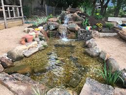 my pond is 6 months old today here u0027s the whole project from start