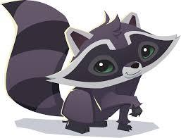 raccoon animal jam wiki fandom powered by wikia