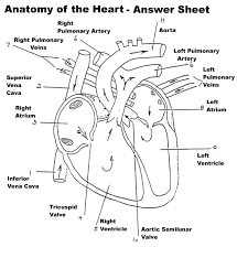 human body organ systems an anatomy and physiology heart test with