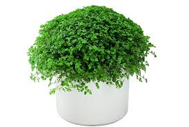 house plants that don t need light 7 beautiful indoor plants that don t need sunlight to survive
