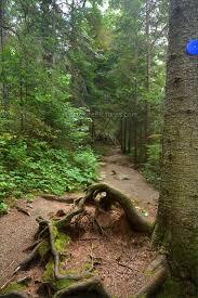 Algonquin Park Interior Camping 32 Best Algonquin Park Pog Lake Images On Pinterest Algonquin