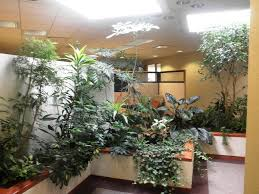 interior landscaping plants u2014 team galatea homes home interior