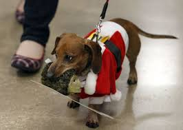 13 adorable photos of dogs in christmas sweaters pets