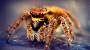 insects spider wildlife nature animal arachnid insect close up