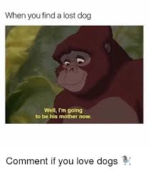 Lost Dog Meme - when you find a lost dog well i m going to be his mother now comment