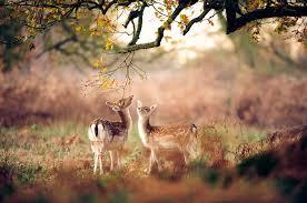 best wildlife photographer