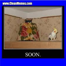 Soon Cat Meme - soon cat clean memes