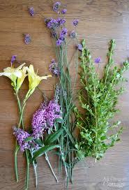 Summer Gardening - your guide to summer gardening success through the heat
