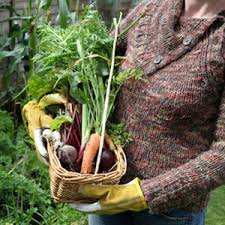 tips for gardening garden vegetable tips how to vegetable