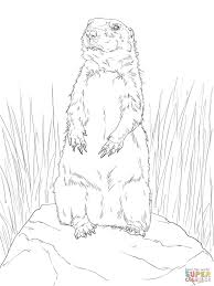 prairie dog standing up coloring page print download animal