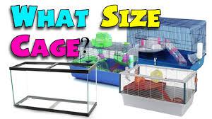 Hamster Cages Petsmart Robo Dwarf Hamster Petsmart Image Tips
