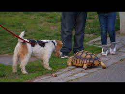 Seeking Nyc Seeking Nyc Tortoise Walker