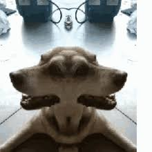 Smiling Dog Meme - dog smiling meme gifs tenor