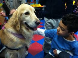 Comfort Pet Certification 12 Photos Of Therapy Dogs Providing Comfort After Tragedies
