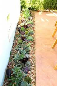modern makeover and decorations ideas plants for rock gardens