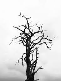 tree images pexels free stock photos