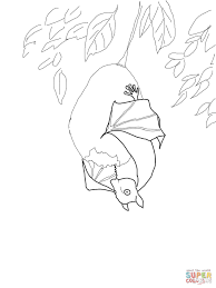 stellaluna coloring page fruit bat coloring page free printable