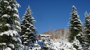 28 christmas tree farm nh where you can cut your own christmas