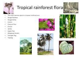List Of Tropical Plants Names - tropical rainforest list of plants tropical rainforest plants