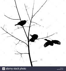 birds black and white minimalistic photo of three sparrows on a