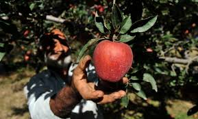 best places to go apple picking near orange county cbs los angeles